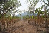 Банановая плантация у дороги