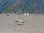 котиков и тюленей бывает в декабре и январе масса