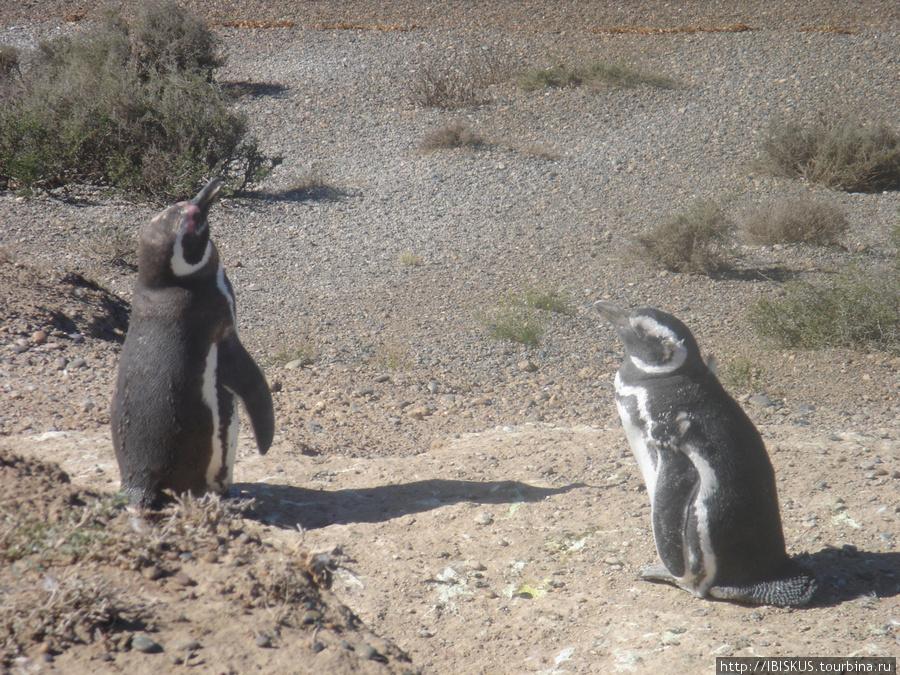 пингвины живут здесь круглый год