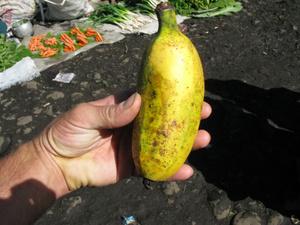 Чудо-бананы, очень толстые, растут в Хагенских горах