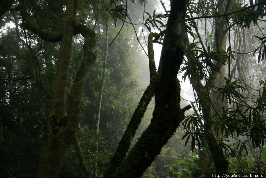 дождевой лес, тут всегда стоит туман