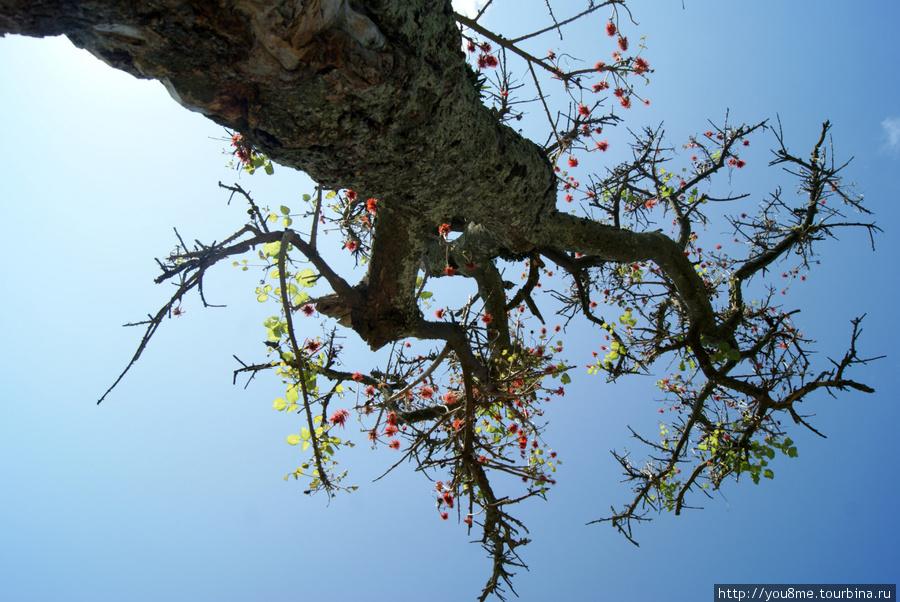 это огонь дерево, так говорил наш проводник, у него ярко-красные цветы