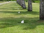 Кладбище поддерживается в образцовом порядке, на деньги австралийцев