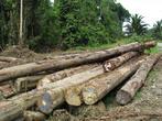 Так складируют лес