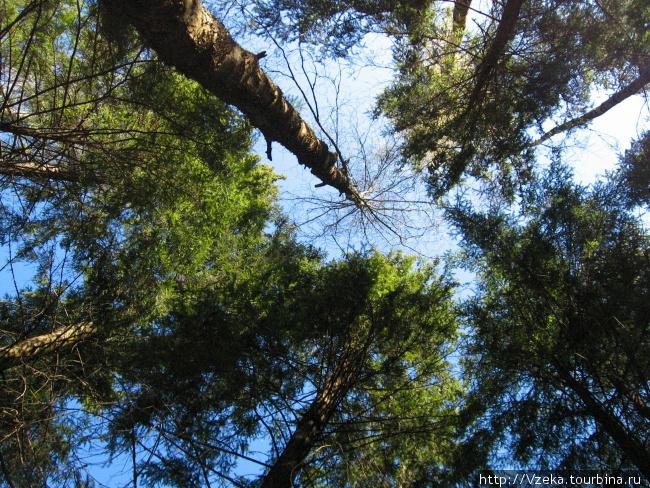 Лес там очень красивый