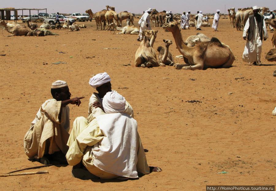 Омдурман, верблюжий рынок