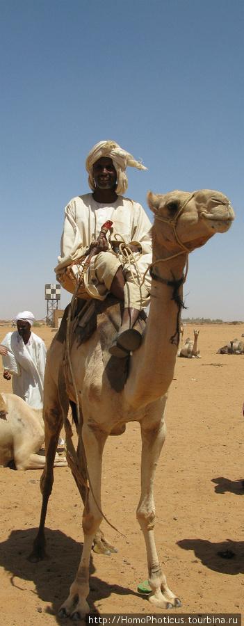 Джигит на верблюде :)