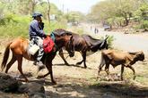 Пастух на лошади