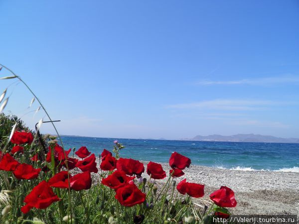 Маки, они и в Греции маки ... Но как красиво!