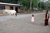 Конь прогуливается по улице
