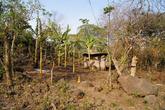Плантация бананов у дороги в Мериду
