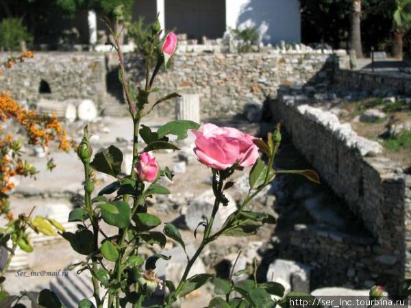 Живые и мёртвые в музее Мавсола