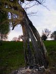 Вот такое дерево, к декорейту которого приложил руку видимо не один человек...