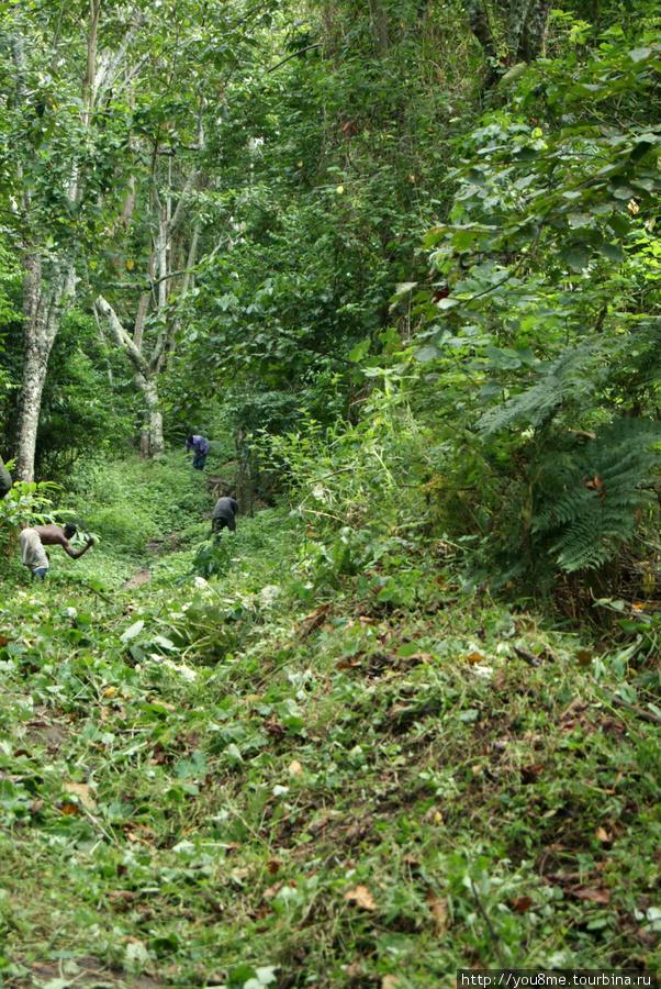 лесорубы у тропы