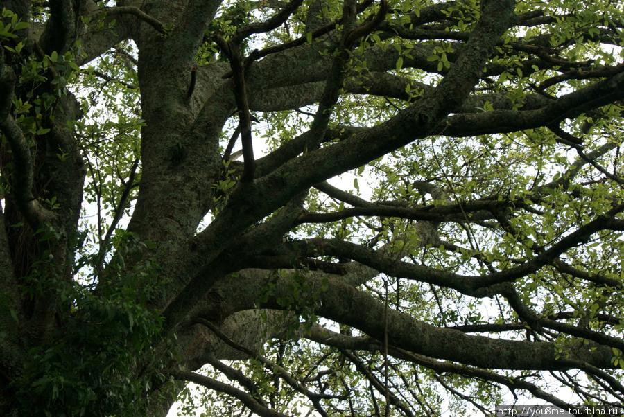 на этом дереве живут синие обезьяны