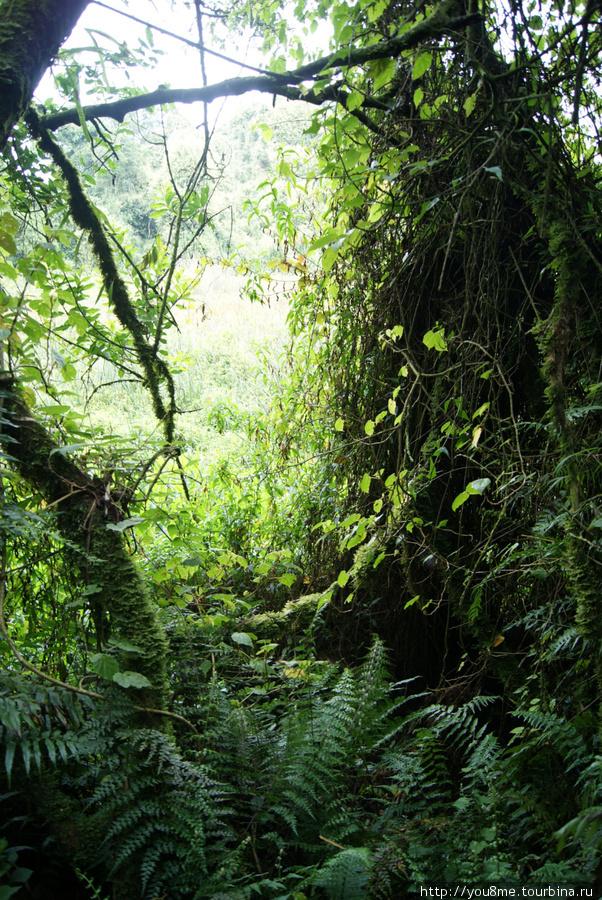 лес, в котором всегда туман