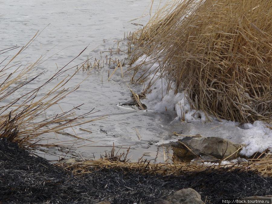 Снег и лед на Михайловском озере
