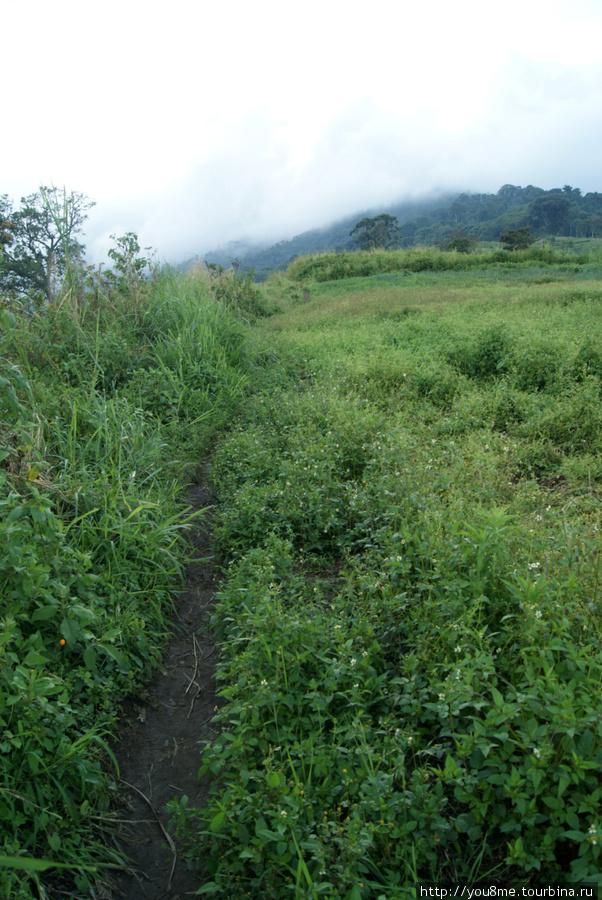 тропинка вдоль поля и горы в тумане, в шапке облаков
