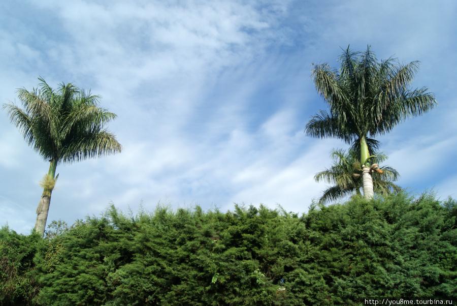 пальмы вдоль дороги)