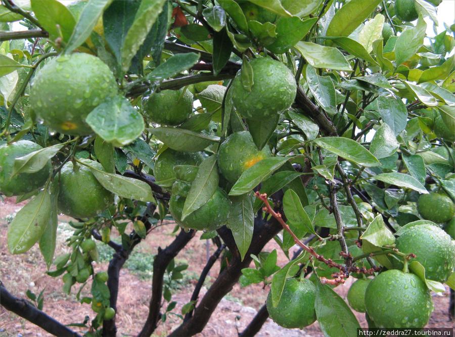 Если на технической остановке носик попудрить быстренько, то можно успеть пофотографировать мандариновые деревья