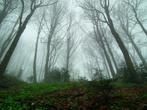 недалеко от начальной точки маршрута (село Сянки, Львовская обл.) буковый лес, низкая облачность