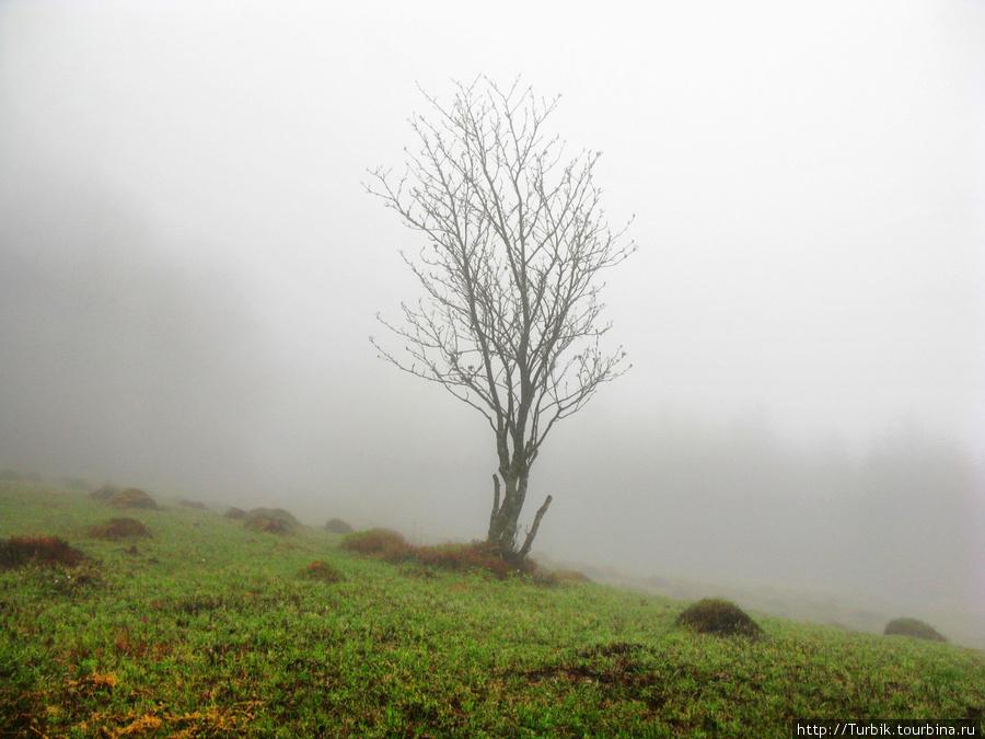 Карпаты. Первое знакомство. Закарпатская область, Украина