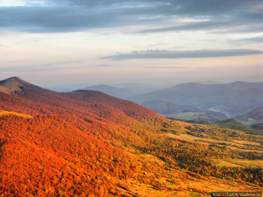 в лучах заката буковые леса преобретают необычный цвет