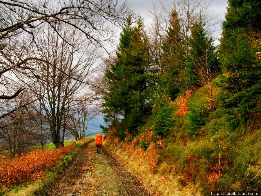 дорога с горы Плай в поселок Воловец