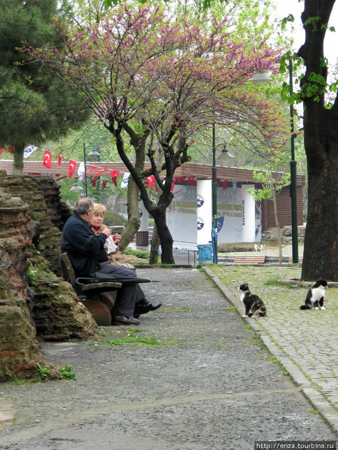 Кто-то обирает своих, а кто-то не брезгует подачками туристов. Стамбул, Турция