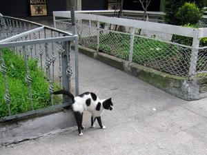 Этот смешной кот телячьей окраски попался мне где-то на подступах к Новой мечети.