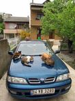 Стая кошек из рыбачьего поселка Анадолу Каваги.