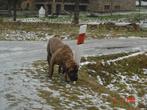 Грозный пес :)