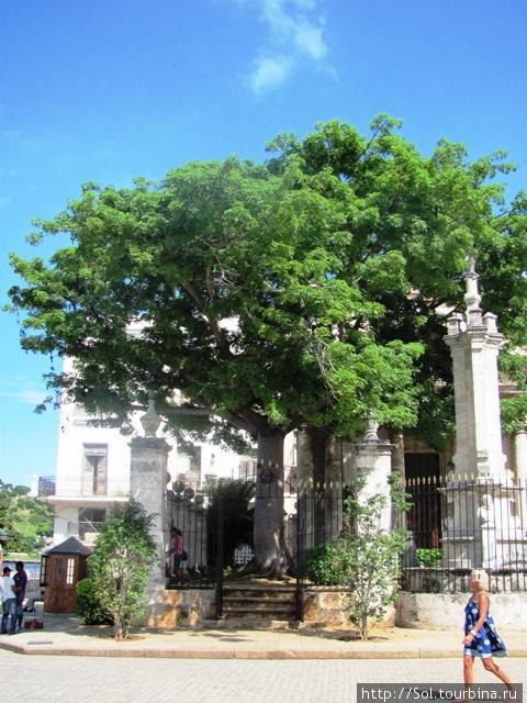 Символ  Гаваны — дерево Сейба. С этого место начиналась Гавана.