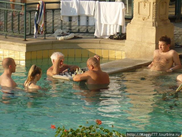 Знаменитые шахматисты. Кстати, неподалеку от купален Сечени — замок с неблагозвучным названием Вайдахуняд. Советую зайти, интересно.