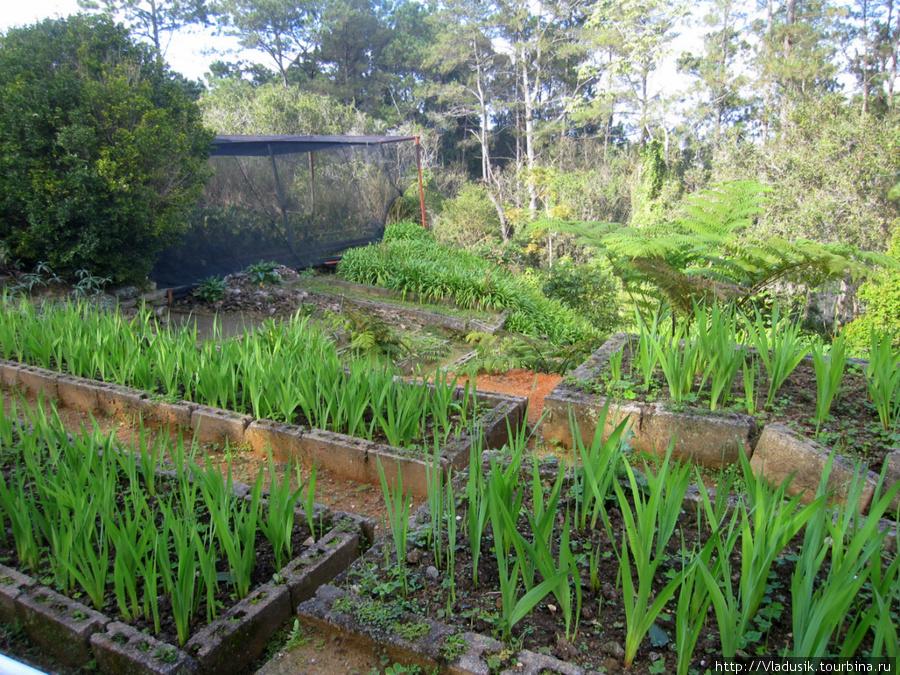 Уютный сад