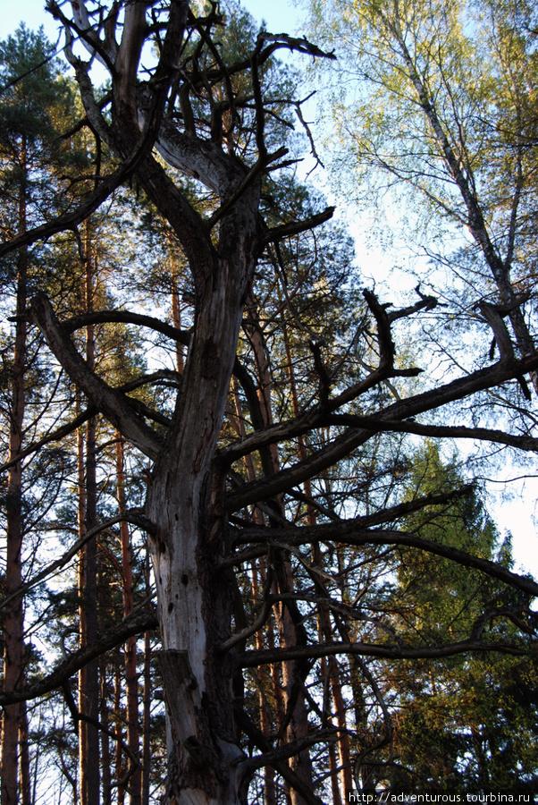 Дерево, изображенное на том самом информационном стенде
