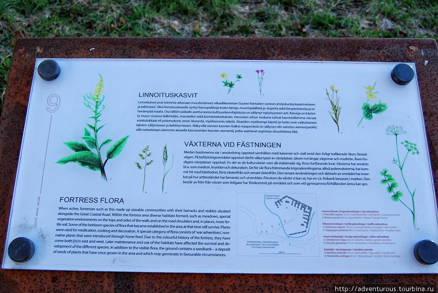 Какие растения растут внутри бастионов