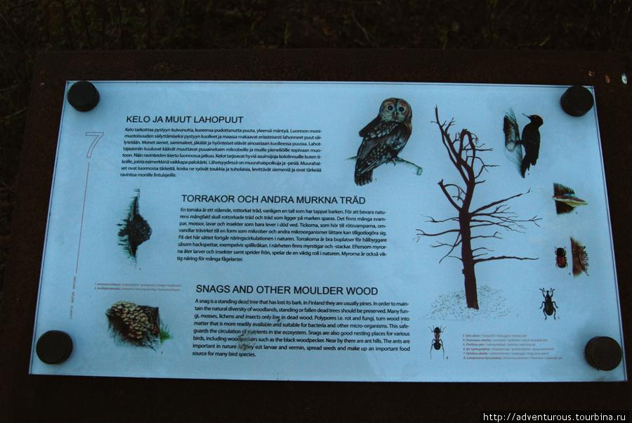 Мы не рубим сухие деревья, потому что они кормят птиц и насекомых