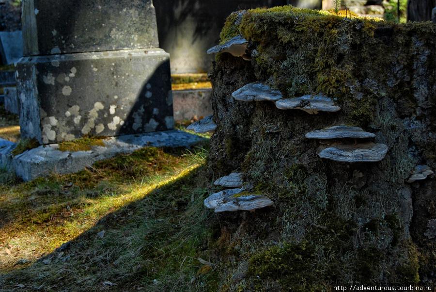 Даже на кладбище есть жизнь