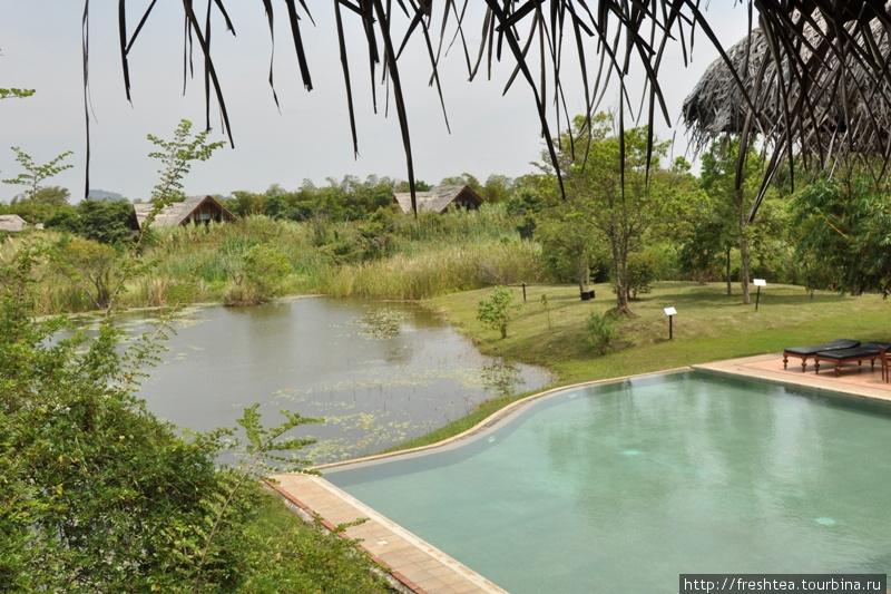 Бассейн для гостей отеля, а пруд — для рыбы и водоплавающих птиц... Им тут счету нет.