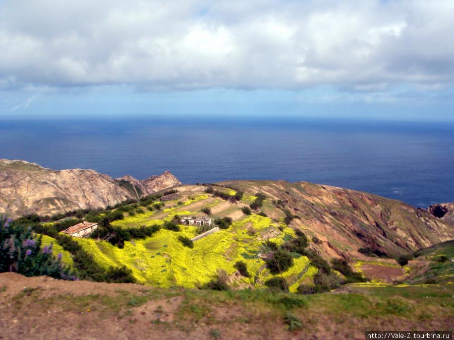весной весь остров покрыт желтыми цветками