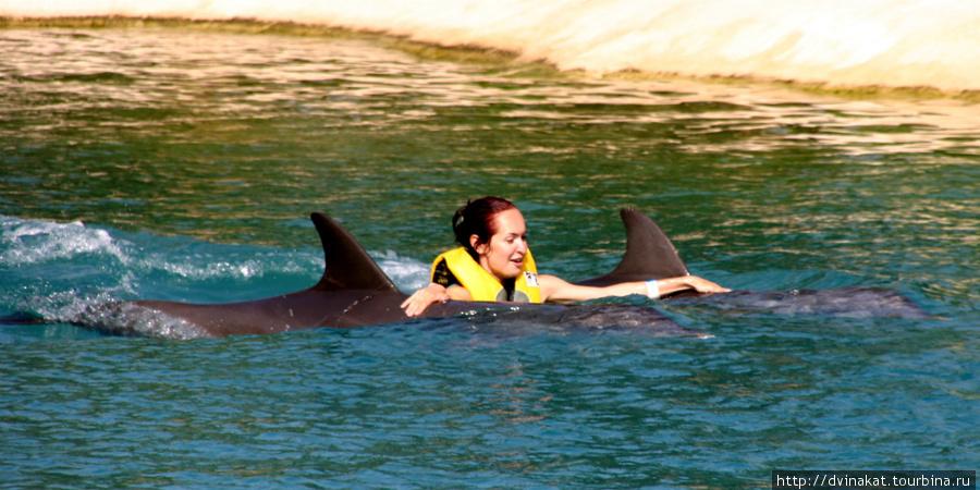 Плавание с дельфинами это море эмоций...они и танцуют и