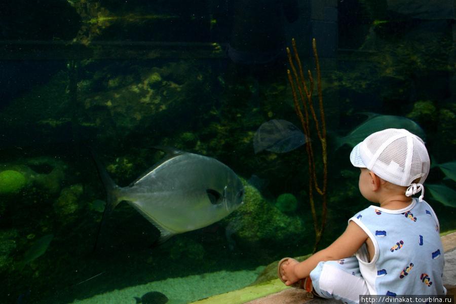 Огромный аквариум не только для релакса, но и купания то же