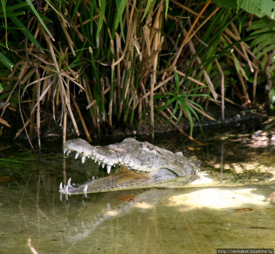 аааа бегемоты, крокодилы...