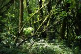 Идти приходится через густой лес