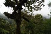 В густом влажном тропическом лесу — на вершине вулкана