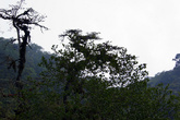 В густом влажном тропическом лесу
