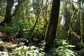 В лесу на склоне вулкана Сан Педро