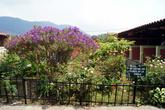 В Апанеке