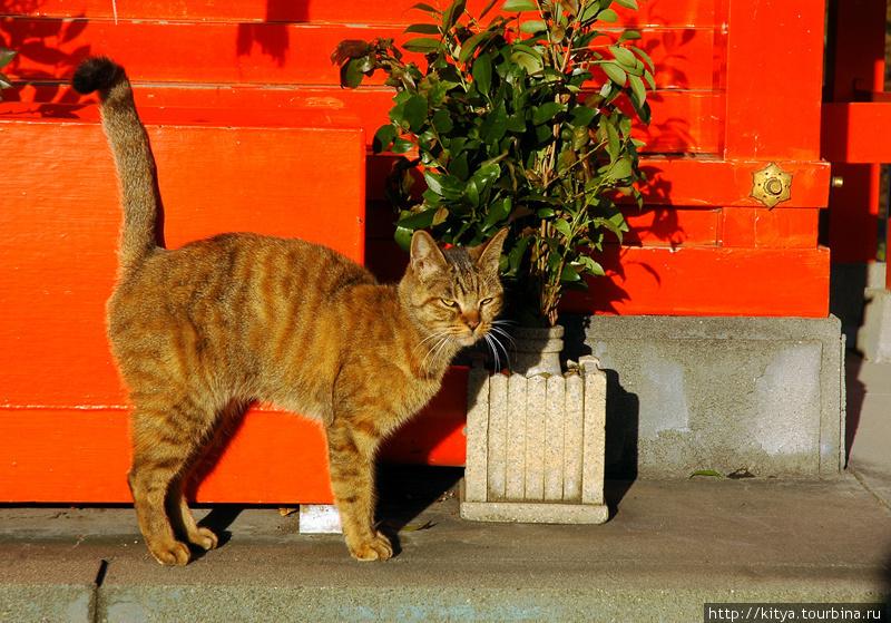 Кошка в святилище Utono I